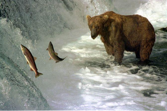 Nuotare controcorrente